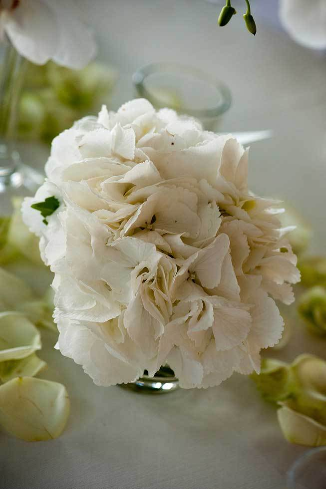 White hydrangeas for wedding banquet in Ravello